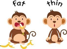 palavras opostas gordo e magro vetor