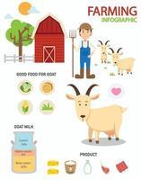 infográficos de fazenda de cabras, ilustração vetor