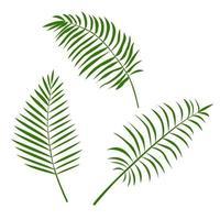 conjunto de folhas tropicais isoladas em um fundo branco. vetor