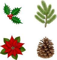 azevinho, pinha, amendoim e galho de pinheiro para decoração de natal vetor