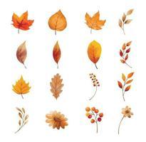 folhas de outono e conjunto de flores isolado. folha com aquarela vetor