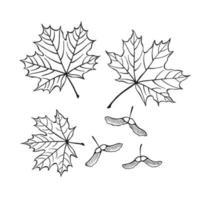 conjunto de contorno de bordo e sementes desenhado à mão. estilo de arte de linha vetor