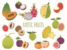 coleções de ilustração de frutas tropicais exóticas vetor