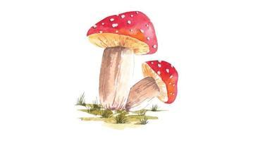 ilustração em aquarela de cogumelos vermelhos vetor