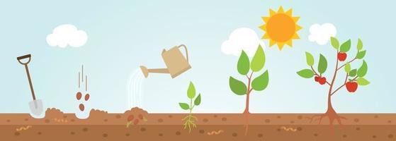 diagrama de crescimento de árvore. ilustração. vetor