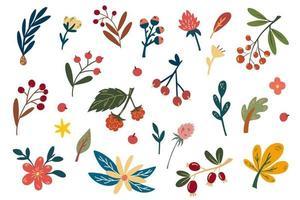 bagas de outono e coleção de flores. mão desenhar buquês de flores. vetor