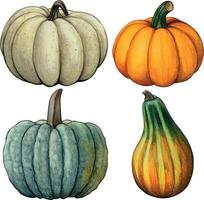 aquarela mão desenhada outono composição de abóbora vetor
