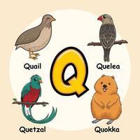 animais letra q do alfabeto para codorna quelea quetzal quokka vetor