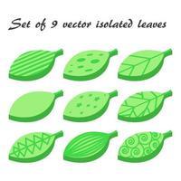 conjunto de vetores de 9 folhas verdes