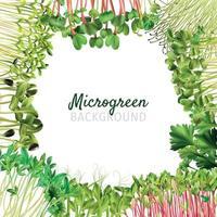 quadro de microgreens de nutrição saudável vetor