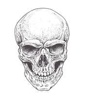 Crânio de Dotwork vetor