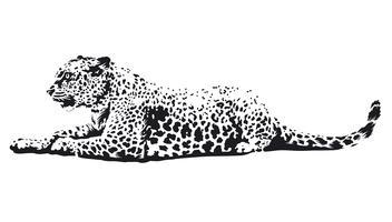 Arte de vetor de leopardo