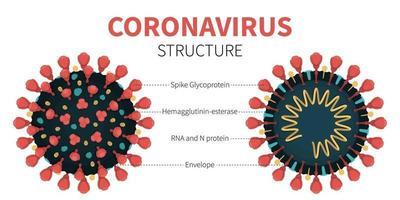estrutura interna e anatomia do vírus covid-19 vetor