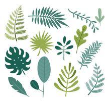 Conjunto de diferentes tropicais e outras folhas isoladas.