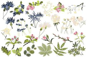 conjunto isolado de flores e plantas vetor