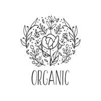 Fundo decorativo floral do vetor. Ervas orgânicas e flores silvestres. vetor