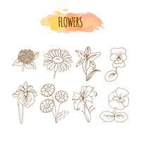 Conjunto de flor de mão desenhada. Ilustração Floral. vetor