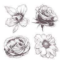 Flores de vetor definido