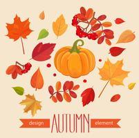 Folhas de outono de cor e abóbora. vetor