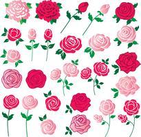 clipart rosa vetor