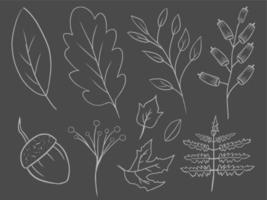 coleção desenhada à mão de folhas de outono vetor
