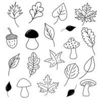 folhas de outono, cogumelos e bolotas em estilo doodle. vetor