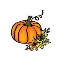 ilustração de abóbora de outono, decoração de outono isolada desenhada à mão vetor