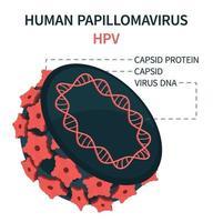 modelo interno de células de vírus do papiloma humano hpv vetor