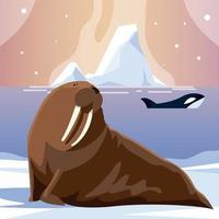 baleia orca e animais morsas pólo norte e iceberg vetor
