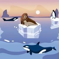 morsa e pinguim em icebergs orca baleias no mar vetor