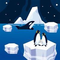 pinguim no iceberg e no mar da orca baleia à noite no pólo norte vetor