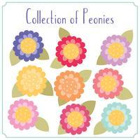 Coleção de peônias coloridas