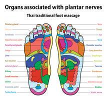 massagem nos pés vetor