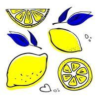 mão desenhada conjunto de limão. vetor