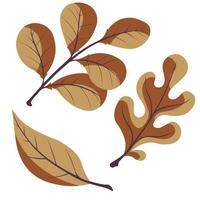 conjunto de folhas de outono em um fundo branco. carvalho, salgueiro, folha de nogueira vetor