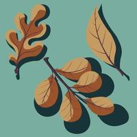 conjunto de folhas de outono. carvalho, salgueiro e folha de nogueira com sombra. vetor