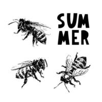 ilustração em vetor mel preto desenho de abelha desenhada à mão