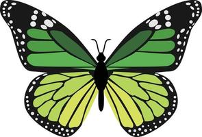 animal inseto borboleta verde vetor