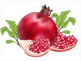 Imagem vetorial de ilustração de fruta de romã e sementes de romã vetor