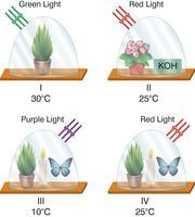 experimentos de biologia vetor