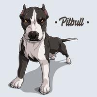 poderoso pit bull de raça de cachorro em pé de corpo inteiro vetor
