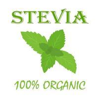 banner de estévia orgânica natural. ilustração vetorial em estilo simples. vetor