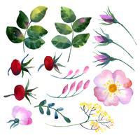 Conjunto de elementos em aquarela rosa mosqueta vetor