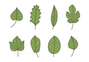 Tipos de folhas verdes vetor