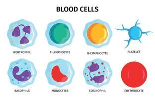 conjunto de células sanguíneas vetor