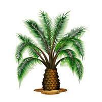 Palmeira vetor