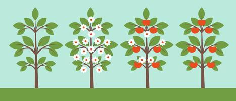 Coleção de árvores diferentes vetor