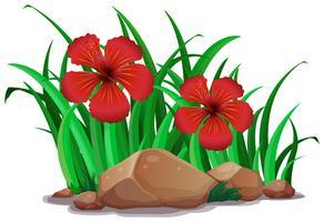Hibicus vermelho no mato vetor