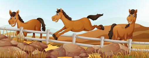 Três cavalos no campo vetor
