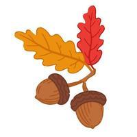duas bolotas da floresta e folhas de outono. ilustração vetorial. vetor